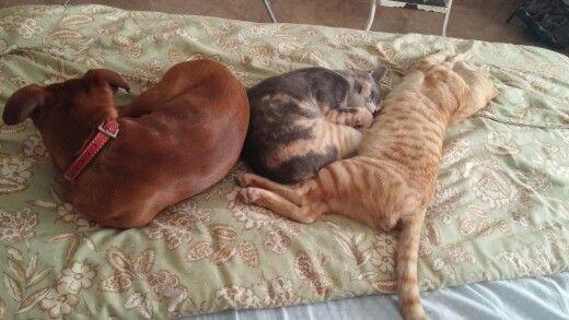 Pedazo de siesta san pegao los tres