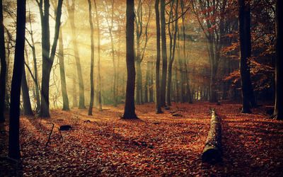 Sunlit autumn forest wallpaper