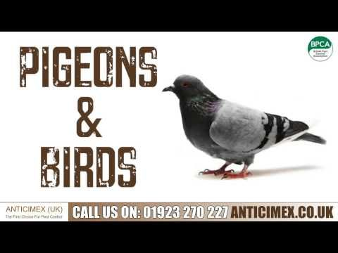 Pest control and vermin control company. Wasp nest removal, rats, mice, cockroaches and all pests and bug removal. Pest controller Watford, pest control Watford, pest control St Albans, pest control Harrow, pest controller St Albans, pest controller Harrow.