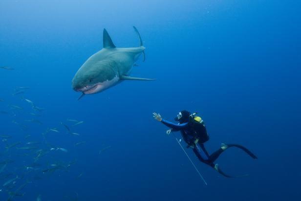Diving Cufflink Scuba Diver Cufflinks Shark flag Diver Cuff Links Scubadiver Cufflinks