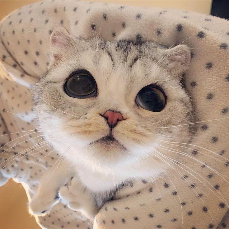 Cutie Patooti!
