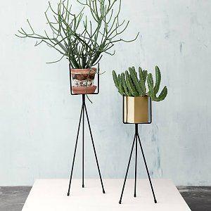 Plant standard