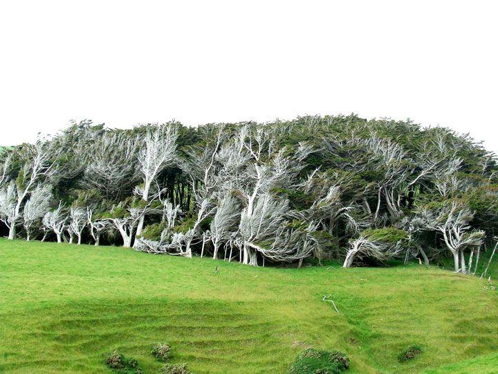 envolez-vous-pour-la-nouvelle-zelande-pour-defier-les-vents-violents-qui-torturent-les-arbres12