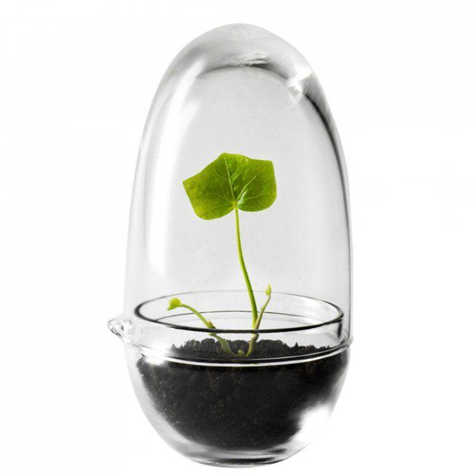 Coup de cœur du jour: la mini-serre pour créer un jardin d'hiver
