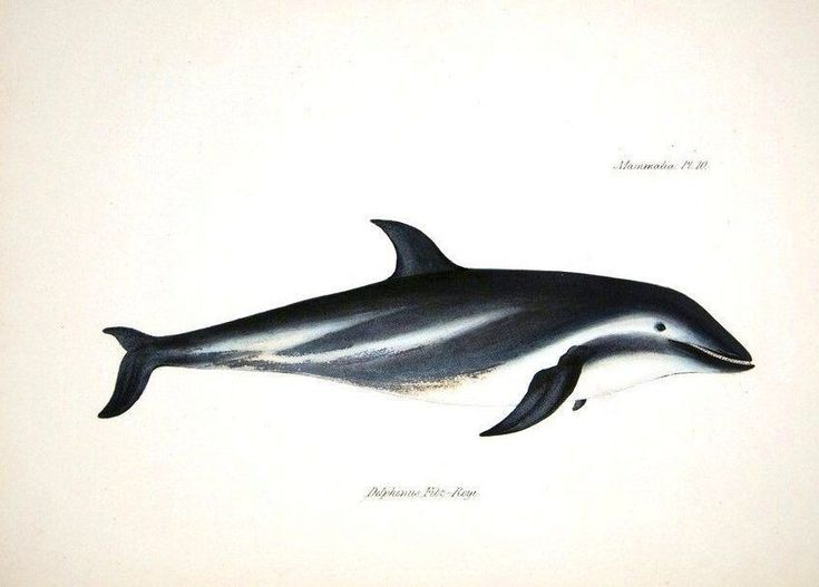 Vintage Whales Dolphins And Seals Prints