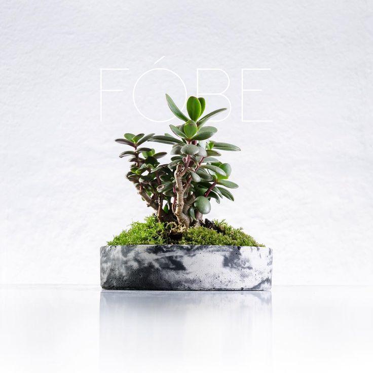 Flowerpot for bonsai made of architecural concrete.  FÓBE  https://www.instagram.com/fobe.cad.craft/