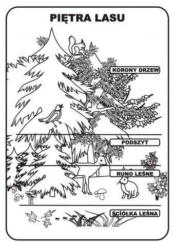 piętra lasu