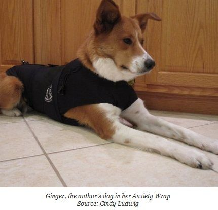 Anxiety Wrap says...: Comparison of Anxiety Wrap, Thundershirt & Storm Defender
