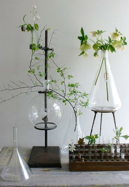 Beakers and Plants