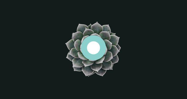 Dionea | Branding on Behance