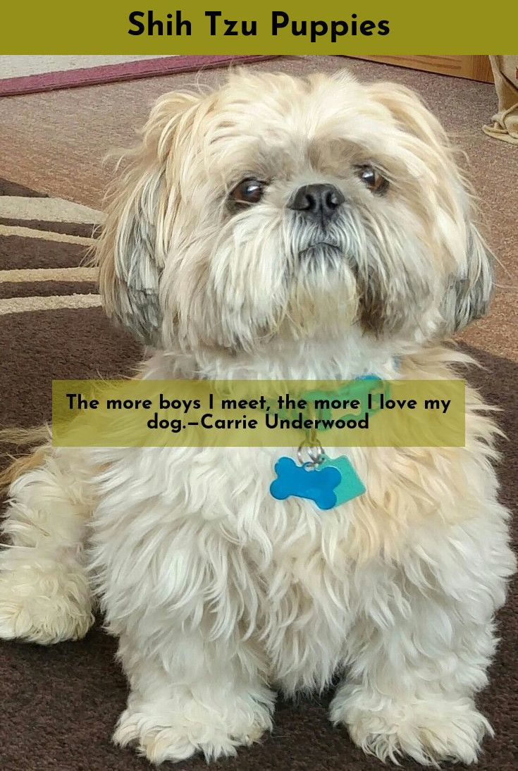 Read Information On Shih Tzu Shihtzu Please Click Here To Learn