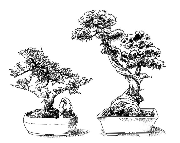 bonsai tree drawings pictures to pin on pinterest
