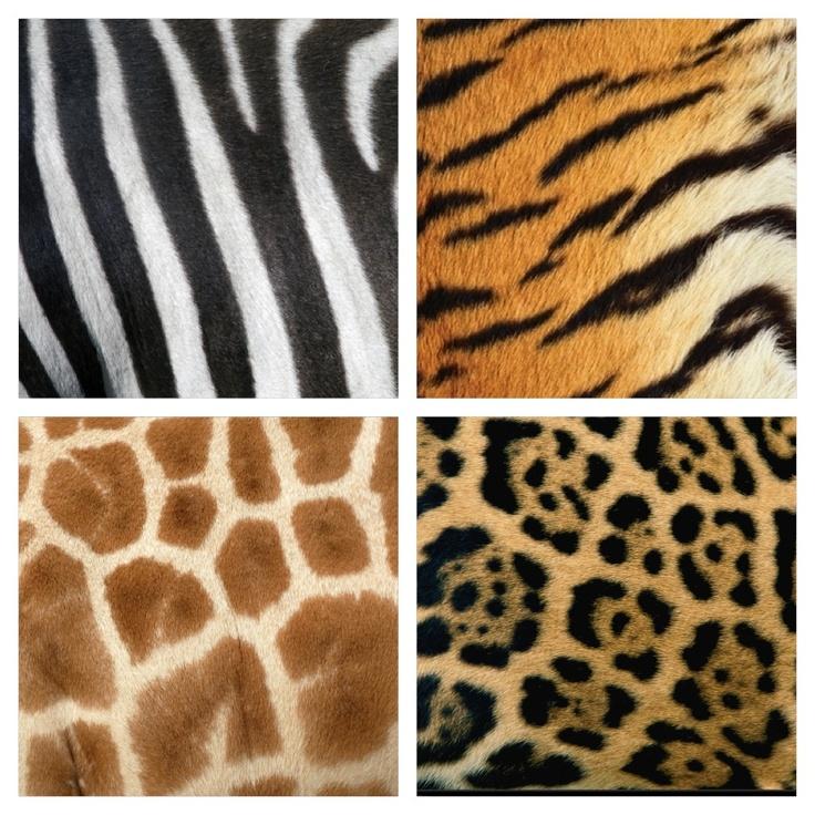 textuur van dierenvachten: zebra, tijger, giraffe, jaguar.