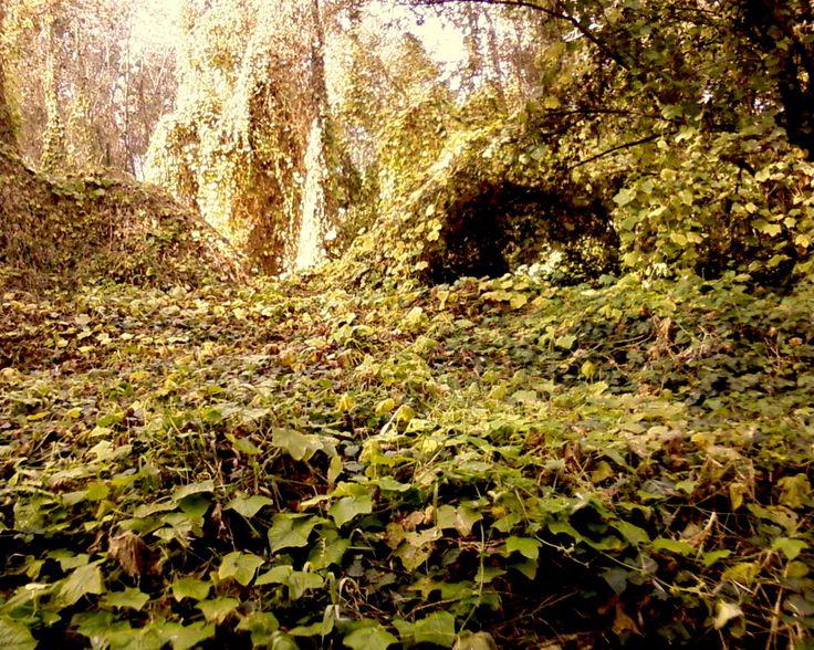 """Isola Serafini, boschetto - (durante le riprese di """"L'ascensore"""", un progetto di QUEM quintelemento)"""