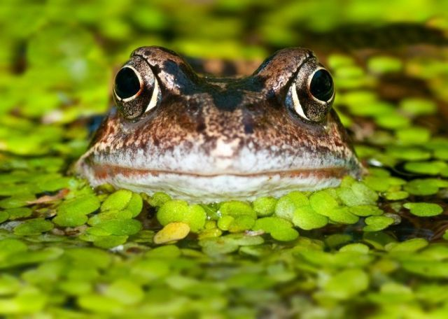 10 things you need to know before you create a wildlife pond  - housebeautiful.co.uk