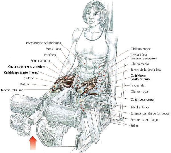 Pin En Your Muscles