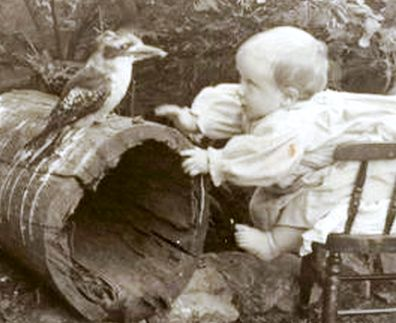 1902 A Kookaburra With Dame Nellie Melbasu0027 Nephew David Mitchell In The Lilydale  Garden Of