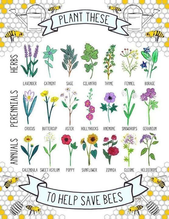 Bees are in danger and that means we all are in danger. Please plant some plants that bees love and need in your gardens…and here's a list to help!  Illustration by Hannah Rosengren, https://www.etsy.com/shop/HannahRosengren — with Illustration by Hannah Rosengren, https://www.etsy.com/shop/HannahRosengren.