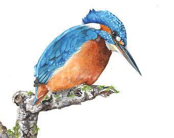 Deze aanbieding is voor een archivering afdruk van mijn originele aquarel schilderij van een ijsvogel.  Papierformaat: A4 - 11,7 inch x 8.3 duim of 29,7 x 21 cm Staand.  Elke prent is afgedrukt met Epson Ultra Chrome pigment inkten op 310gsm mooie Fine Art papier. Ik afdrukken al mijn afdrukken thuis op aanvraag. De kleuren zijn mooi en levendig en het papier van hoge kwaliteit is archivering.  Let op: kleuren kunnen iets verschillen als gevolg van kalibratie verschillen in monitoren…