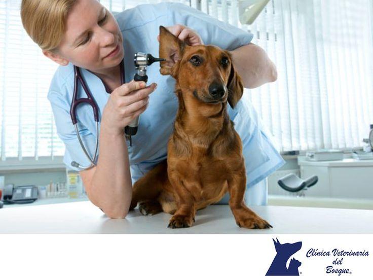 Visitas al médico veterinario. CLÍNICA VETERINARIA DEL BOSQUE. Algunos síntomas que pueden indicarte que tu mascota no se siente bien son: pérdida de apetito, rechazo al agua, disminución o aumento súbito de peso, lentitud o rechazo a jugar, vómitos, salivación excesiva o respiración irregular. En Clínica Veterinaria del Bosque te invitamos a acudir con nosotros para atender a tu mascota. Recuerda que contamos con servicios de urgencia las 24 horas los 365 días…