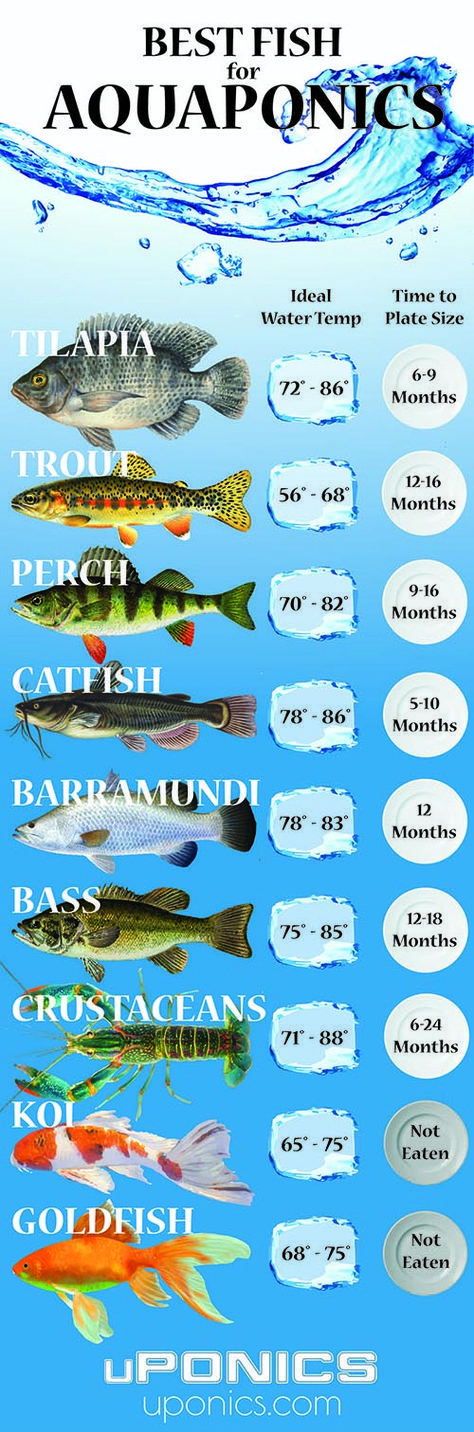 17 best images about gardening tips and ideas on pinterest for Best fish for aquaponics