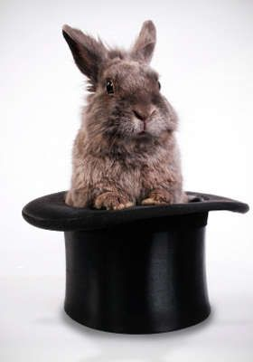 Hare in the Hat