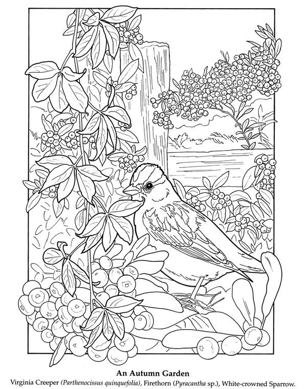 color it bird - oiseau à colorier .vignes