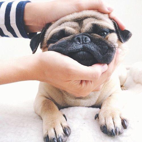 Cute Pets | funny pets | pets | pup | puppies | dogs | cute | adorable | puppy love | animals | Schomp Honda
