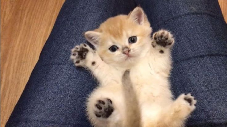 Heart Warming Kittens – Cutest Kittens in the World 2017 | Adorable Cat ...