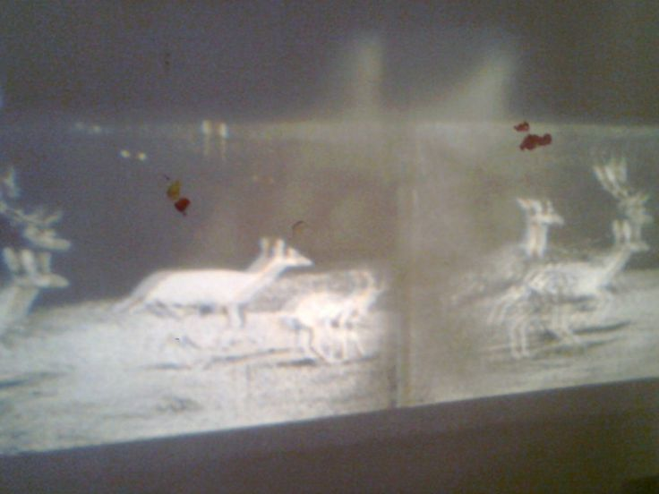 "Monika Niwelinska, ""Lascaux"", 2012 - projection on a wall covered with unfixed photo-sensitive emulsion"