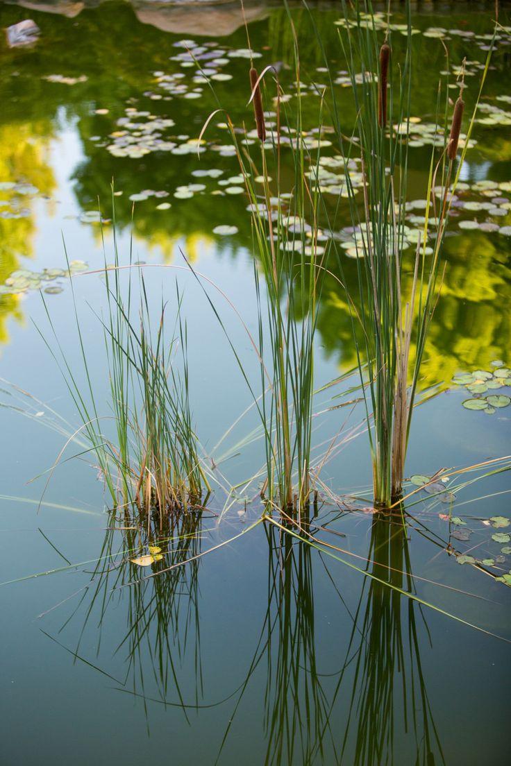 12 best EBMJG Beauty images on Pinterest | Japanese gardens, Beauty ...