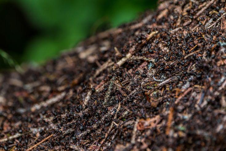 Superorganism Personalities in Ant Colonies