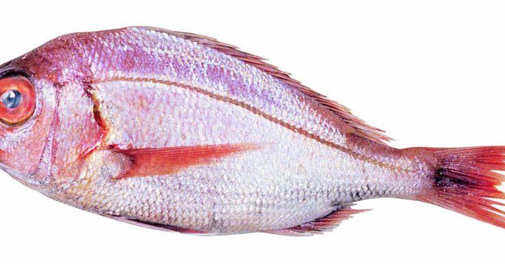 Comparasión del pargo rojo vs el pargo rosado . En general, hay dos tipos de peces: los cartilaginosos y los óseos. Los peces cartilaginosos incluyen a los tiburones, a las rayas y cazones, cuyos esqueletos están hechos de cartílago. Los peces óseos representas a más de 25.000 especies de peces cuyos esqueletos se componen de huesos. Entre las variedades de peces óseos están los pargos. Los ...