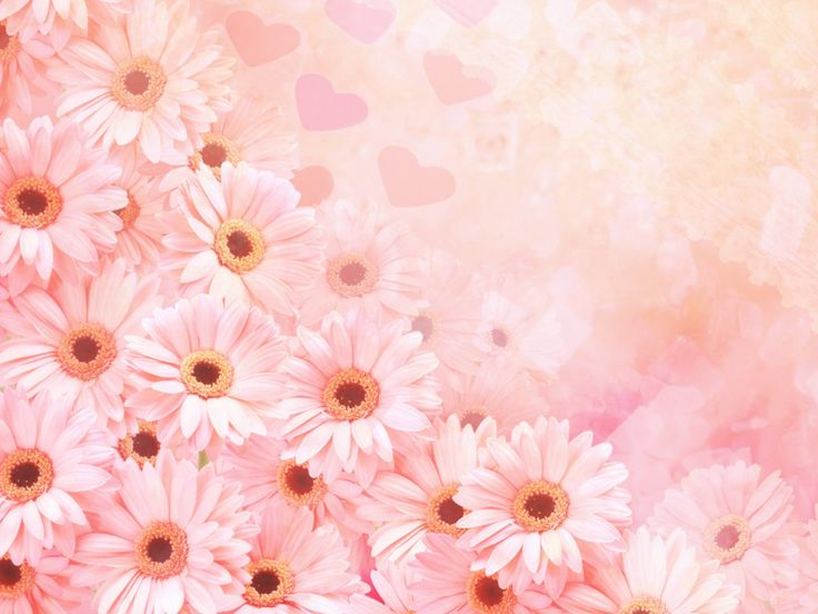 Fondos Rosados Con Flores Para Fondo De Pantalla En Hd 1 HD Wallpapers