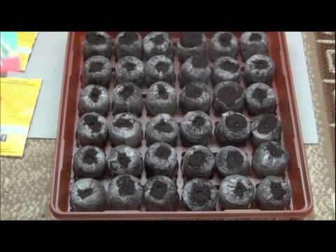 Выращиваем рассаду петуний (100% всхожесть).САД и ОГОРОД - YouTube