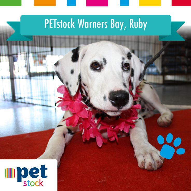 Ruby the PETstock Warners Bay winner