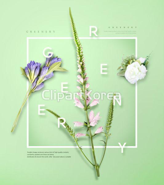PSD 그리너리 그린 꽃 봄 초록색 웹 웹콘텐츠 웹사이트 템플릿 칼라템플릿 팝업 팝업템플릿 백그라운드 이미지 디자인 greenery green flower spring web webcontents website template color popup background image design #clipartkorea #tongroimages