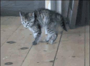 Bouncy Kitty. LOL!  2015-01-02