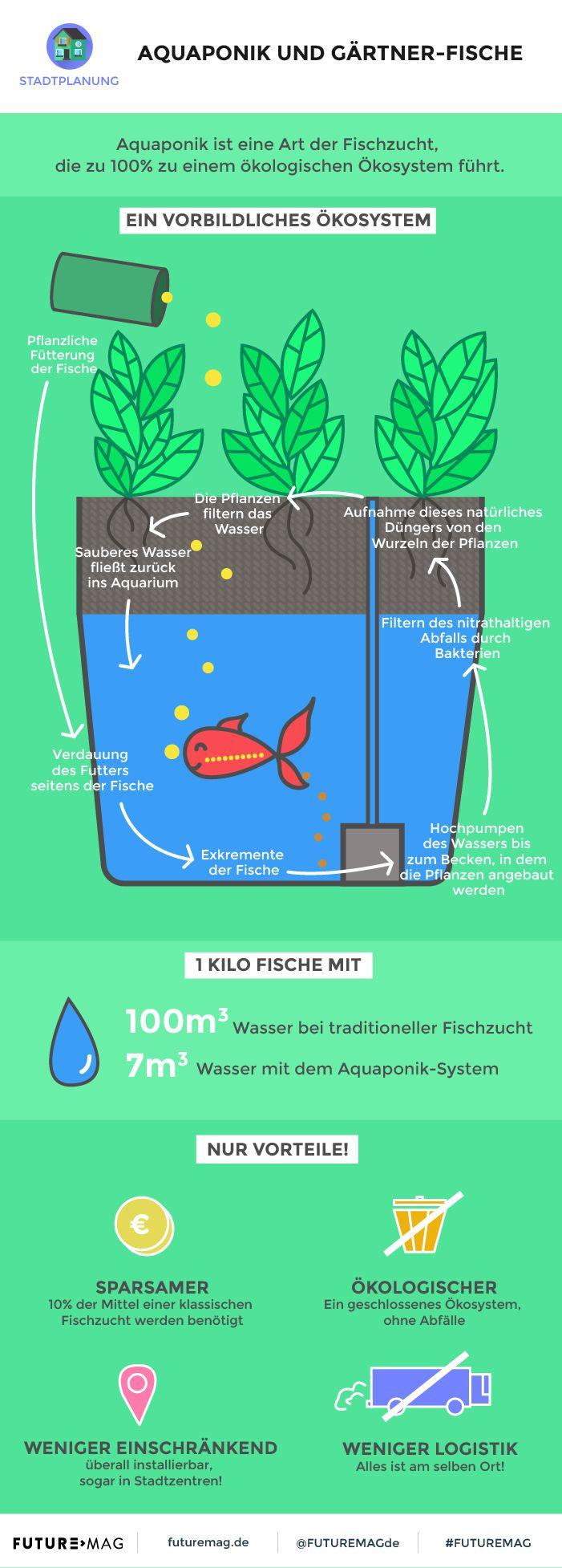14 best aquaponie images on pinterest gardening plants and aquarium