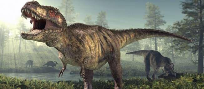 Tyrannosaurus Rex aurait en fait été dominé par un redoutable ancêtre, Siats meekerorum, plus long qu'un bus scolaire et pesant au moins 4 tonnes.