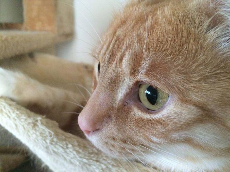 Katzenaugen - Wenn sich die Pupillen bei Katzen verändern