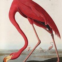ixxi image bank teylers museum art birds of america john james audubon