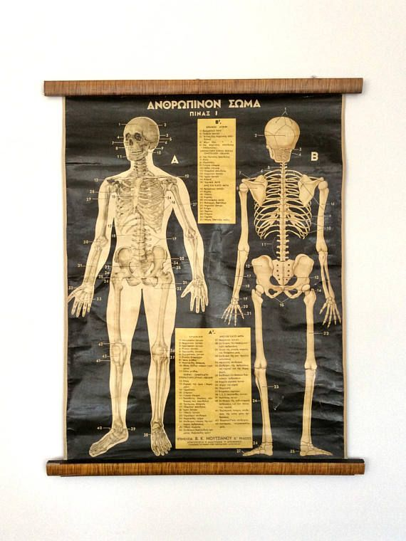 Your Place To Buy And Sell All Things Handmade Anatomy Art Education Poster Rare Antique
