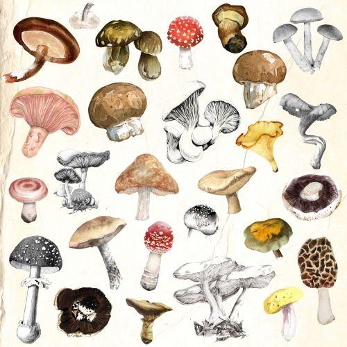 Mushrooms Gardenz