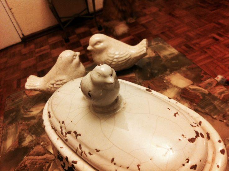 Bird, pájaros en nuestro hogar