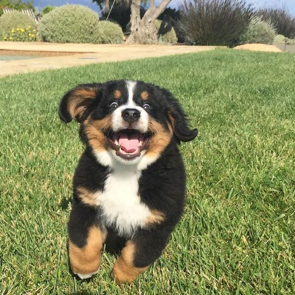 30 Dogs With The Best Smiles For National Dog Day Picture Gallery