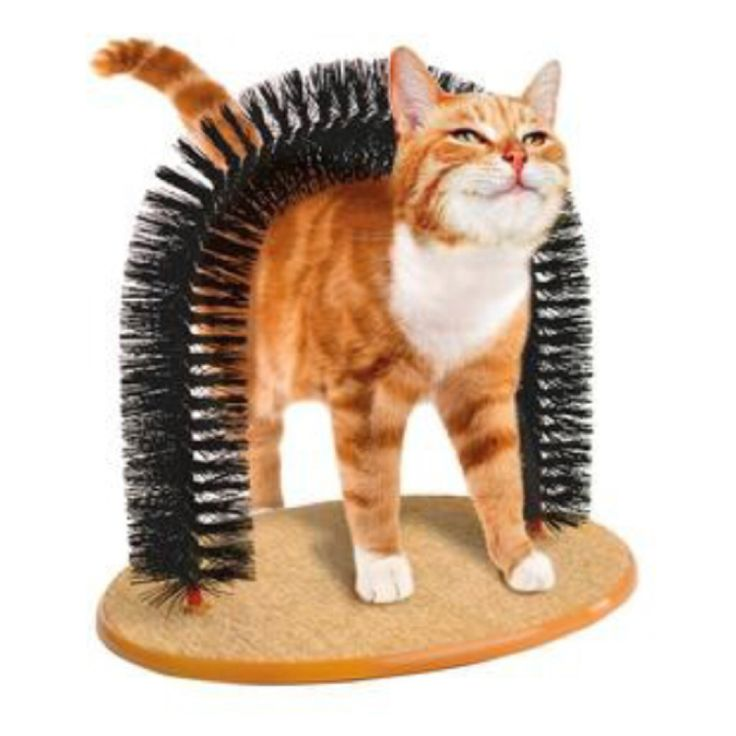 CLICK TO SHOP brushing and massaging arch #archforcat #forcat #cuteanimal #pet https://www.theshopally.com/sophie-etchart/20160427/click-to-shop-brushing-and-massaging-arch-archforc