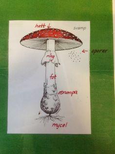 Bildresultat för svampens delar