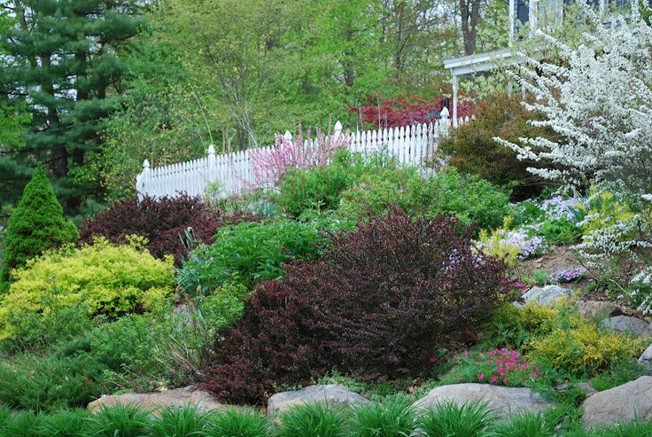 Landscaping ideas for slopes slope landscape like the for Hillside landscaping plants