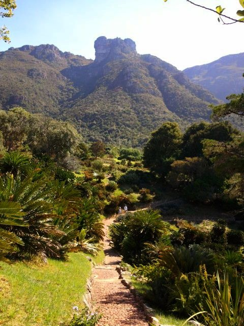 Kirstenbosch, The gardens, South Africa